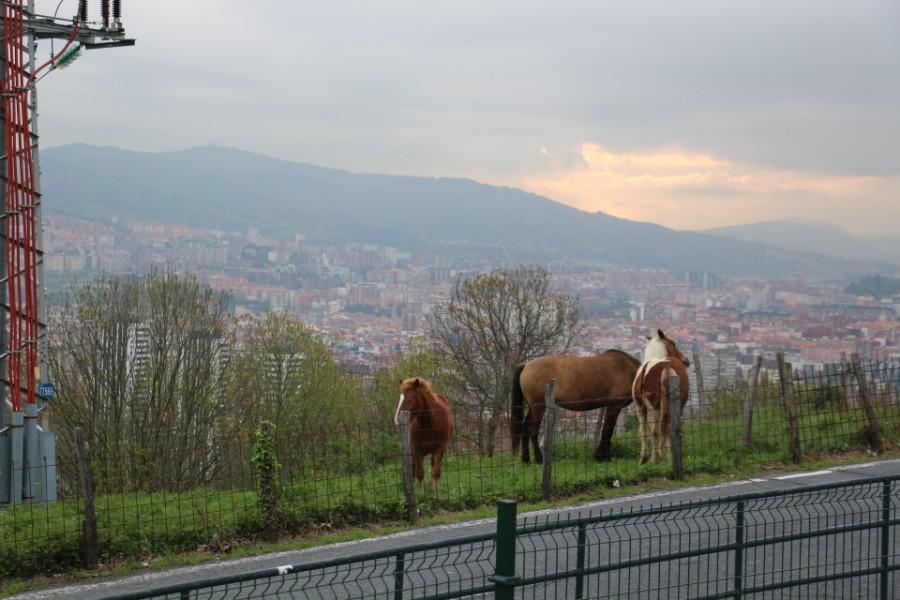 Portugal och Marocko resan del två. Bilbao till Keukenhof